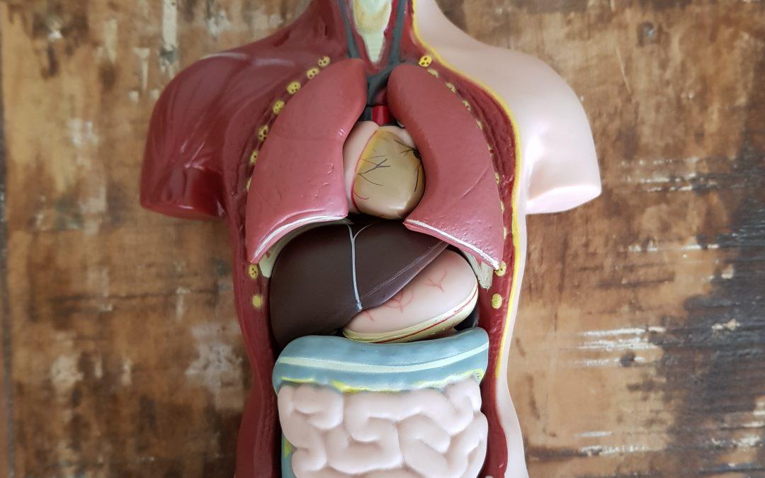 Darmklachten – belang goede diagnose buikklachten